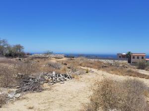 Pitahayas, Reyes Land, Cabo Corridor,