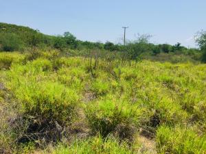 Miraflores, Parcela Collins, East Cape,