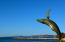 Whale Sculpture in the Malecon Of La Paz