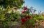 18 De La Manzana, Casa Kelly, San Jose del Cabo,