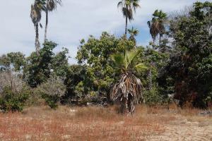 Todos Santos - Cabo San Lucas, Tequila Garden 2, Pacific,
