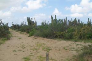 LOTE 5 Manzana 23, TERRENO AGUA BLANCA, Pacific,