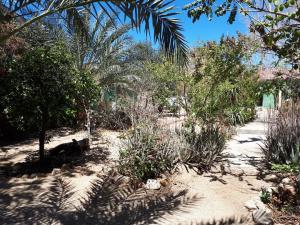 Mijares, Cabo San Lucas,