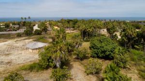 Calle Sin Nombre, San Sebastian Organic Huerta, Pacific,