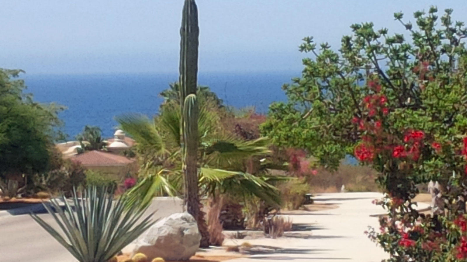 San Jose del Cabo, ,Land,For Sale,Padre Sistiaga,19-3106
