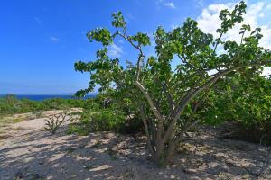 Coral Vista Lot