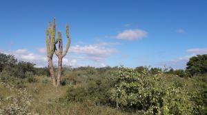 Lote de terreno urbano, Lote Cardon, East Cape,