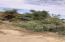 Lote #7 Retorno del Tornado, Lote 7 El Tornado, San Jose del Cabo,