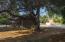 big trees provide shade