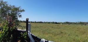 Ocean Farmland Views