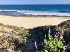 OCEAN VISTA WITH DESERT LUPINE