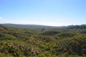 Camino a San Felipe, EL ROBLE, San Jose del Cabo,