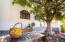 Pistachio tree provides shade for dining, reading or relaxation