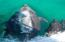 ADMIRE THE SEALIFE IN THE SEA OF CORTEZ, THE WORLD AQUARIUM PER JACK CUSTO