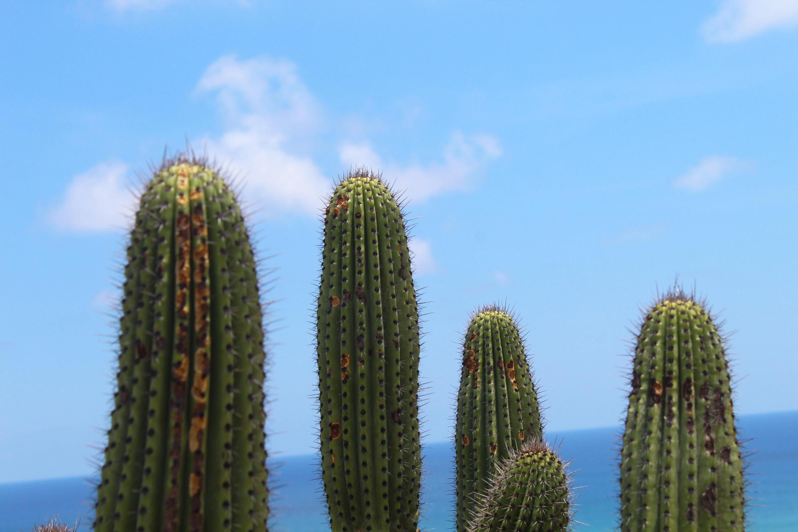9 Palms Developer Land Reserve-12
