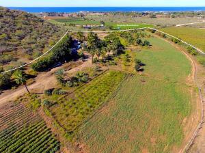 5.4 Acre Palm and Produce Farm