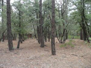 Parcel 3 Conifer Drive, Payson, AZ 85541
