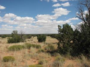 Sec.31 T15N,R16E: CHEVELON ACRES, Heber, AZ 85928