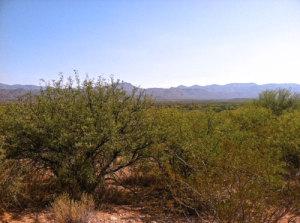 5Y W Ocotillo Lane, Tonto Basin, AZ 85553