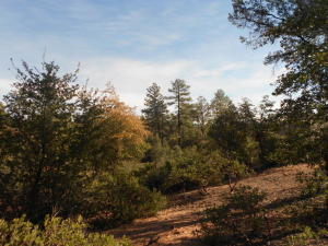 111 N FEATHER PLUME Circle, Payson, AZ 85541