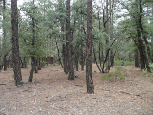 Par 3,4, 5 Conifer Drive, Payson, AZ 85541