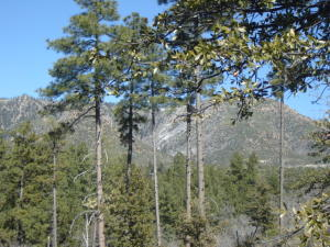 36G E Coues Deer Lane, Payson, AZ 85541