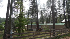 Beautiful Tall Ponderosa Pines all over large .53A fully fenced