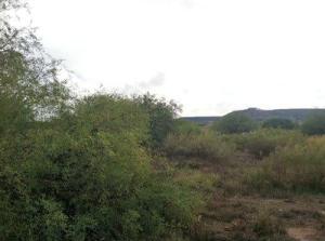 46 E Cactus Flats Road, Tonto Basin, AZ 85553