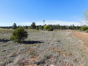 2268 MEADOW LANE, Overgaard, AZ 85933