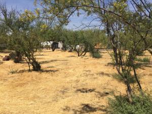 059N W Packard Drive, Tonto Basin, AZ 85553
