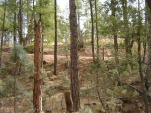 Lot 2 Tonto Rim Ranch, Christopher Creek, AZ 85541