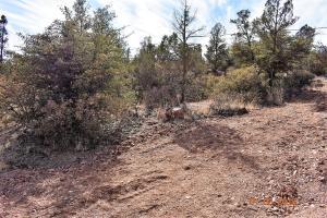 1403 W Doe Circle, Payson, AZ 85541