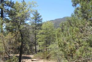 4324 N Kiva Circle, Lot 87, Pine, AZ 85544