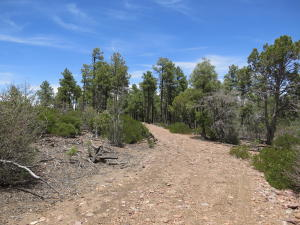 4305 Forest Service Rd 139 A, Unincorporated County, AZ 85924