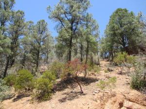 1004 E Rainbow Trail, Payson, AZ 85541