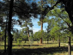 2929 Cedar Ridge Circle, Happy Jack, AZ 86024