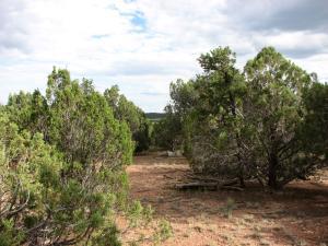4982 Elk Trail Road, Overgaard, AZ 85933