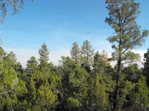 3700 Pinehurst Drive, Happy Jack, AZ 86024