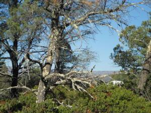 801 Desert Mimosa Court, Payson, AZ 85541