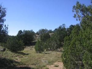Lot 735 Chevelon Canyon Ranch, Heber, AZ 85928