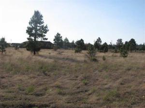 2736 Zane Grey, Overgaard, AZ 85933