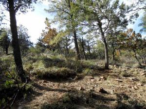 8 Portal Drive, Pine, AZ 85544