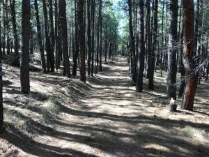 PRIVATE ROAD TO CAMP SITE