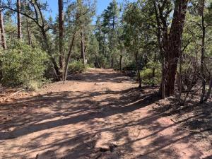 6731 Pine Cone Trail, Pine, AZ 85544