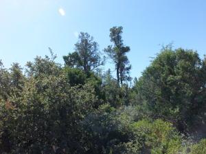 2001 E Rainbow Trail, Payson, AZ 85541