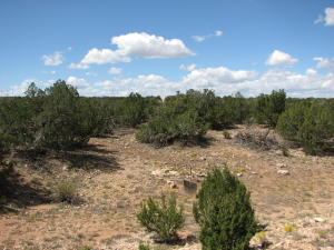 Lot 30 Chevelon Retreat #1, Heber, AZ 85928