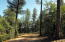 Lot 47 Forest Trail, Pine, AZ 85544