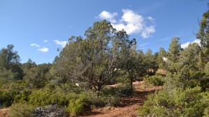 2116 N Gibson Peak Place, Payson, AZ 85541