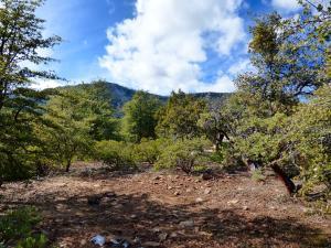 4405 N Eagle Feather Cir, Pine, AZ 85544