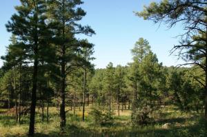 TBD Forest Road 122, Happy Jack, AZ 86024